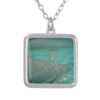 Collier shark