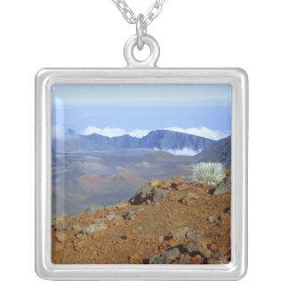 Collier Silversword sur la jante de cratère de Haleakala