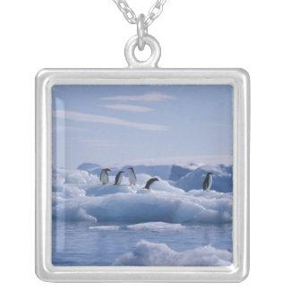 Collier Six adeliae de Pygoscelis de pingouins d'Adelie)