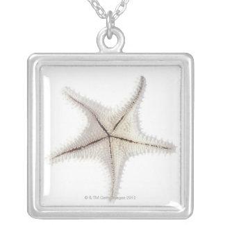Collier Squelette d'étoiles de mer, plan rapproché