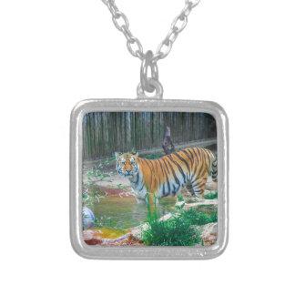 Collier Tigre