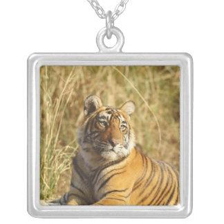 Collier Tigre de Bengale royal en dehors de la prairie,