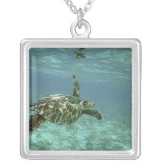 Collier Tortue de mer verte, (mydas de Chelonia), côte de