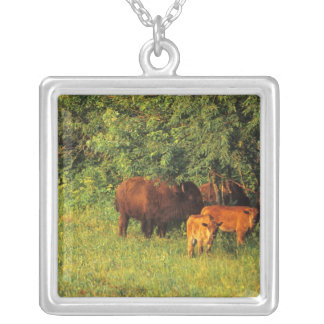 Collier Troupeau de bison chez Neil Smith NWR en Iowa