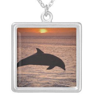 Collier Truncatus de Tursiops de dauphins de Bottlenose)