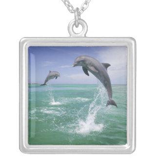Collier Truncatus de Tursiops de dauphins de Bottlenose) 4