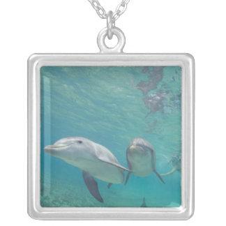 Collier Truncatus de Tursiops de dauphins de Bottlenose) 6