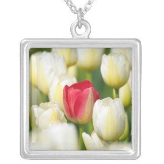 Collier Tulipe rouge dans un domaine des tulipes blanches