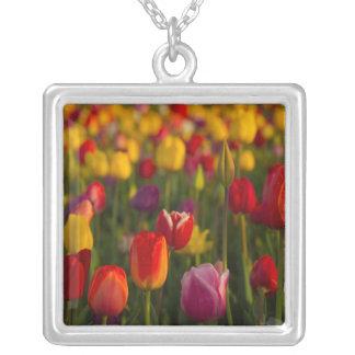 Collier Tulipes, festival de tulipe, Woodburn, Orégon,