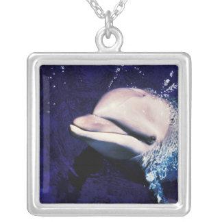 Collier Tursiops de dauphin de Bottlenose de la