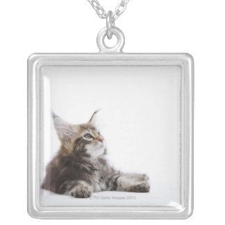 Collier Un chaton de chat de ragondin du Maine