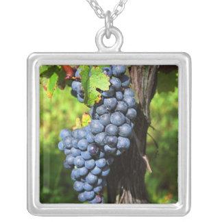 Collier Un groupe de merlot mûr de raisins sur une vigne