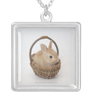 Collier Un lapin est dans un panier. Nain de Netherland