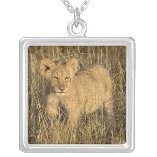 Collier Un petit animal de lion s'étendant dans le buisson