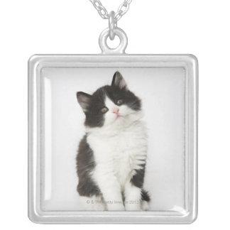 Collier Un regard se reposant de jeune chaton dans