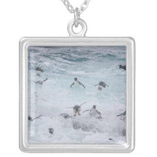 Collier Un troupeau des pingouins de Rockhopper lancent