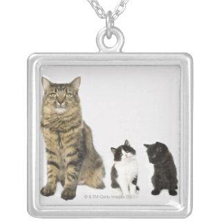 Collier Une mère avec ses quatre chatons toute la séance