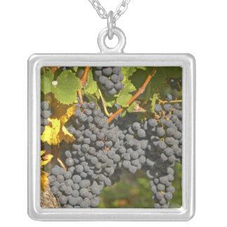 Collier Une vigne avec les groupes mûrs de raisin merlot -