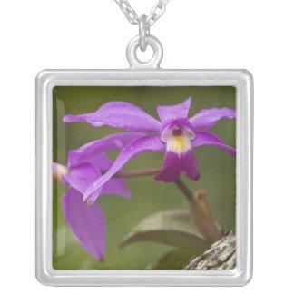 Collier Violacea violet de Cattleya d'orchidée de