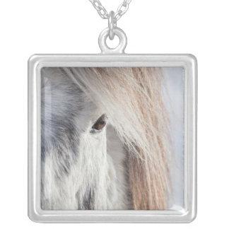 Collier Visage islandais blanc de cheval, Islande