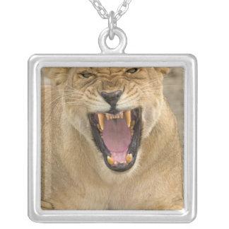 Collier Vrille B, Afrique de l'Est, Tanzanie de lionne,