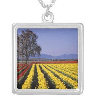 Collier WA, vallée de Skagit, tulipe 2 de vallée de Skagit
