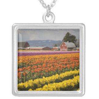 Collier WA, vallée de Skagit, tulipe met en place en