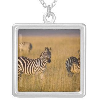 Collier Zèbre de plaines (quagga d'Equus) dans l'herbe,