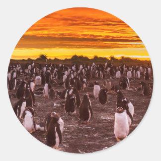 Colonie de pingouin au coucher du soleil, les sticker rond