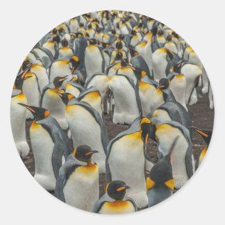 Colonie de pingouin de roi, Malouines Sticker Rond