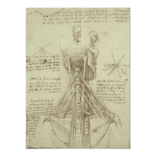 Colonne vertébrale d'anatomie humaine par Leonardo Posters
