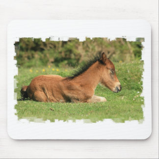 Colt se reposant dans le tapis de souris d herbe