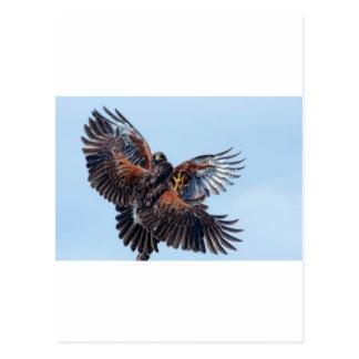Combat de faucons pour le contrôle du ciel carte postale