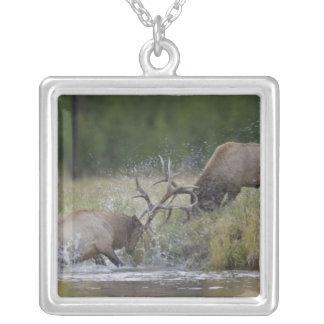 Combat de taureaux d'élans, Yellowstone NP, Pendentif Carré