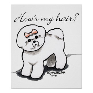 Comment de Bichon Frise mes cheveux Poster