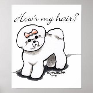 Comment de Bichon Frise mes cheveux Posters
