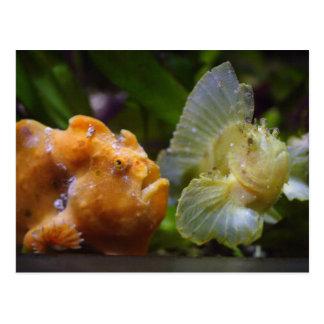 Commerson d'Antennarius et triacanthus de Carte Postale