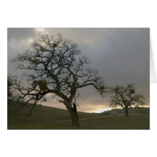 Compagnons d'arbre : Chênes d'hiver avec le gui Cartes De Vœux