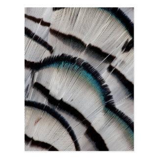 Conception argentée de plume de faisan carte postale