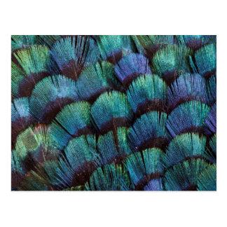 Conception bleu-vert de plume de faisan cartes postales