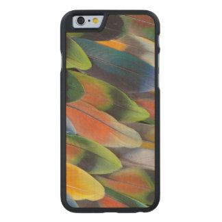 Conception colorée de plume de perruche coque en érable iPhone 6 case