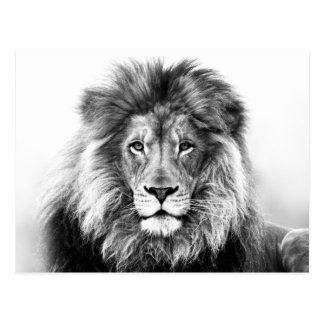 Conception de lion cartes postales