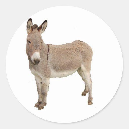 Conception de photographie d'âne adhésifs ronds