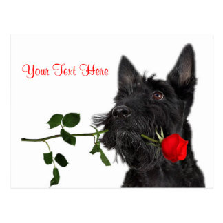 Conception de Valentine de rose rouge de chiot de Carte Postale