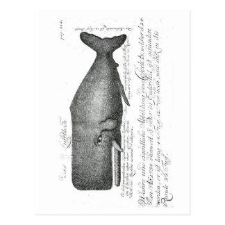 Conception vintage de baleine carte postale