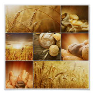 Concepts de Wheat.Harvest. Collage de céréale Posters