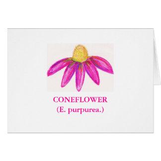 CONEFLOWER (purpurea d'E.) Carte De Vœux