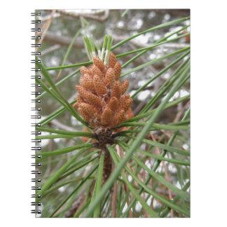 Cônes non mûrs de mâle ou de pollen de pin carnet