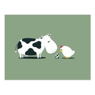 Confusion de poulet d'oeufs de vache cartes postales