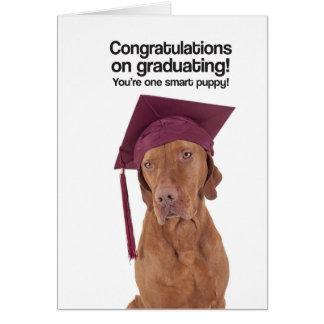 Congrats sur recevoir un diplôme (Vizsla) - carte